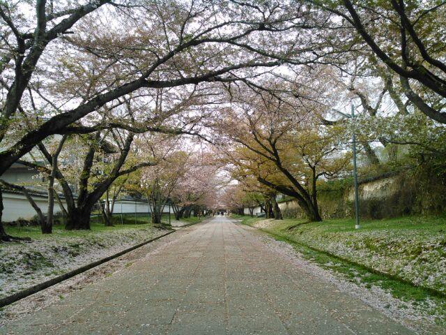 醍醐寺20154-9